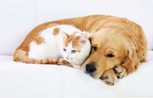 Keeping Your Pets, Energy Budget Comfortable!