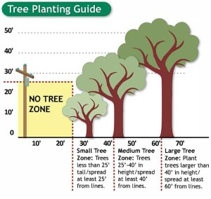 Plant A Tree In The Right Place