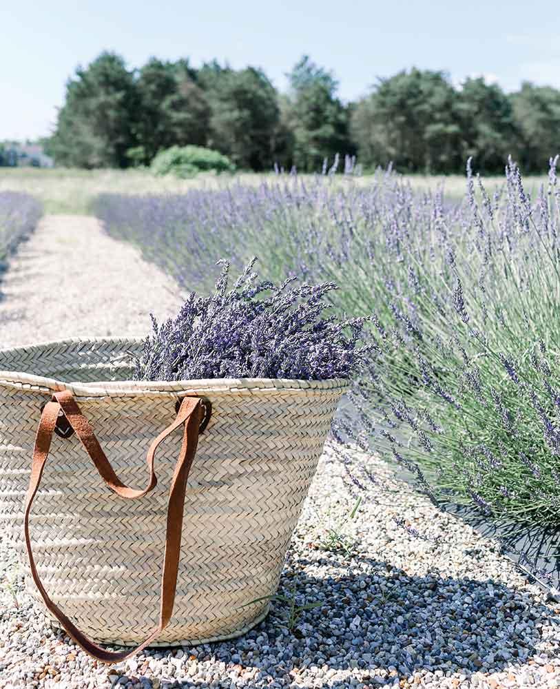 A basket of lavender in lavender field